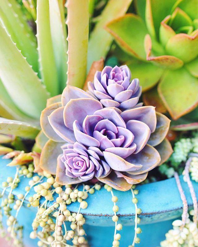 89aa90305b340ceb60e827cdfc896909--succulent-plants-vita